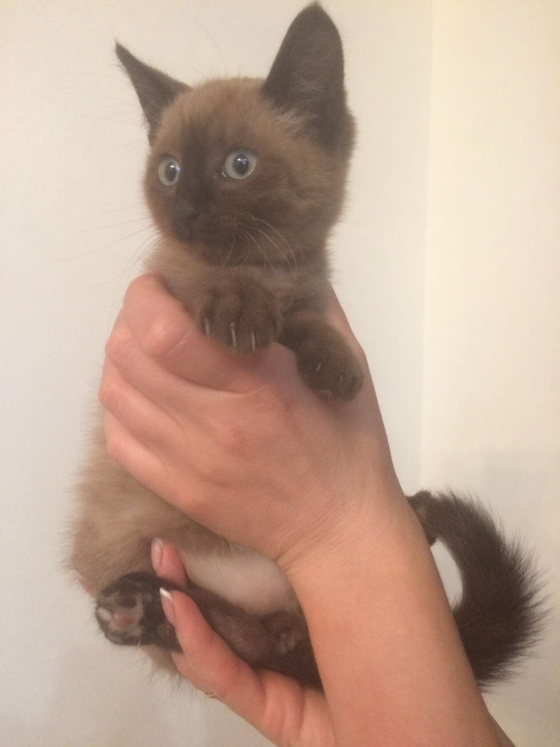 Малыш (котик)